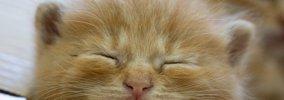 猫がする最上級の『甘え行動』5選