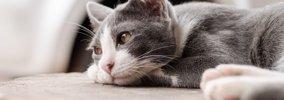 一人でいるのが嫌いな猫の4つの特徴