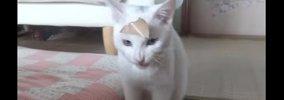 おでこに何かが!!取れないガムテープに癇癪をおこす白猫!