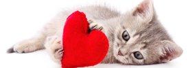 猫が大好きという気持ちを飼い主に伝える9つのサイン