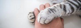 猫が心を許した人にだけする仕草5つ