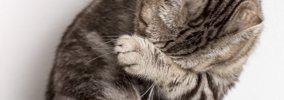 猫が『見捨てられた』と勘違いしてしまう飼い主の行動5選