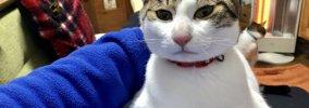 猫好きも思わず爆笑!『猫のあるある』5選