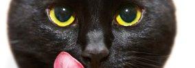 猫にちゅーる おすすめの使い方6つ