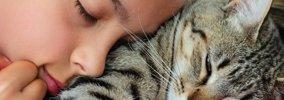 愛猫の死。飼い主にできること【火葬と埋葬のメリットデメリット】