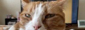 猫が飼い主に見せる『大好き♡』サイン5つ