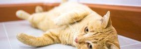 猫が甘える時にする5つの仕草とその気持ち