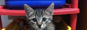 愛猫に『ありがとう』を伝える方法5選