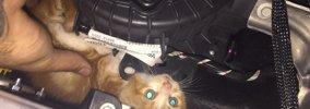 危ない!新年の高速道路で子猫と警察官の大捕り物が巻き起こった!!