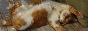 猫の里親条件が厳しい理由は?その裏側にあるものとは