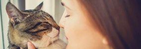 猫の知能レベルはどれくらい?
