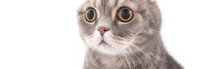 猫が地震を予知した時に見せる異常行動と対策について