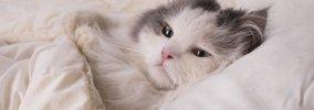 猫が添い寝してくる時の5つの気持ち