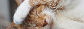 猫が突然死んでしまう3つの原因