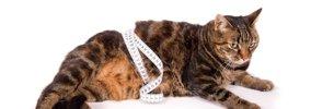 猫の体重は何キロが良いの?肥満の基準と健康管理のコツ