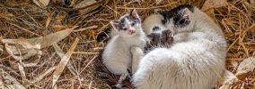 猫の出産ラッシュ…自分でお世話できないのであれば拾わないで!