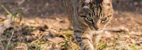 猫よけ対策の効果的な4つの方法とおすすめグッズ