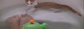 子猫がお風呂に落下!ピンチと思いきや、まさかの水泳教室に!