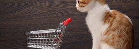 猫をペットショップで購入する際のメリットとデメリット