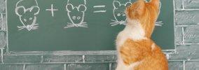 猫の記憶力はどのぐらい?驚きの研究結果とその特徴