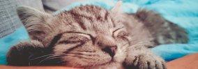 猫の奴隷に気がついたらなっていた…飼い主あるある13選