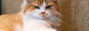 嫌いな人に見せる猫の10の態度