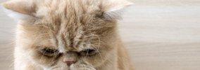 猫を悲しませてるかもしれない…10の飼い方