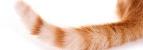 猫がしっぽを振る6つのパターンとその意味