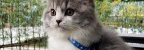 ハーネスを付けてお出かけ大好き!の猫が話題♡