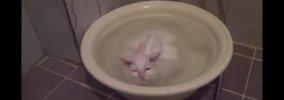 最高のお湯だニャ♪お風呂から出たくないお湯好き仔猫さん