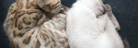猫が『寒がっている』時の仕草4つ!おすすめの防寒策は?