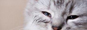 猫が寂しかった時にする5つのサイン