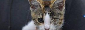 左目にひどい潰瘍…でも隻眼の猫トレバーは元気いっぱい!