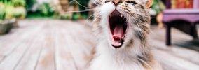 猫が「アオーン」と鳴く時の気持ち