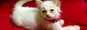 【話題】9年前に保護した白猫…現在とのビフォーアフターに驚き!