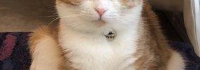 猫が飼い主に感謝している時にする10の仕草