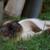 シャム猫のミックスの性格と特徴