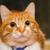 鳴かない猫のおすすめ7種類!マンション暮らしの方は必見!