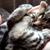 お口半開きに手をパタパタ・・・熟睡中の仔猫の姿が癒される!(movie)