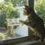【まるで童話みたい!】猫さんとリスの微笑ましい友情(movie)