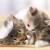 猫の2匹目を迎え入れるときの注意点とは?
