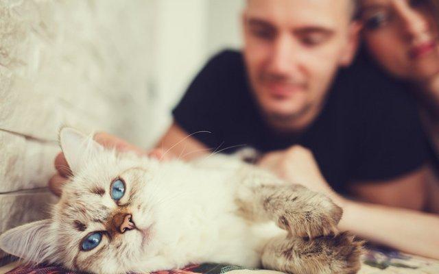食べ物 猫 な の 好き