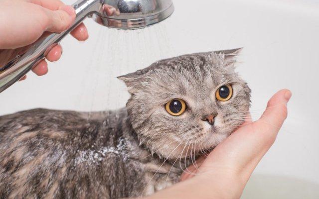 入れ 方 お 風呂 猫