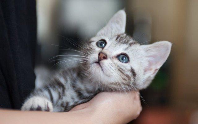 ペット ショップ 売れ残り 猫 里親 ペットショップの売れ残り猫を助ける方法4つ