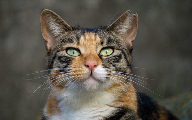 安い 猫 費用 避妊 手術