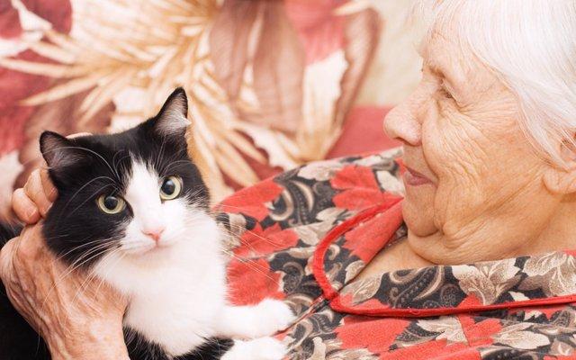 猫 年齢 96