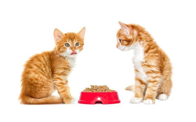 子猫 2 ヶ月 体重