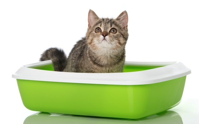 トイレ しつけ 猫