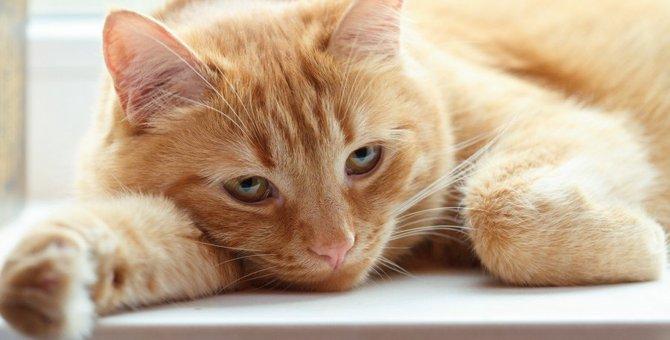 家族が亡くなって遺された猫にしてあげたいこと5つ