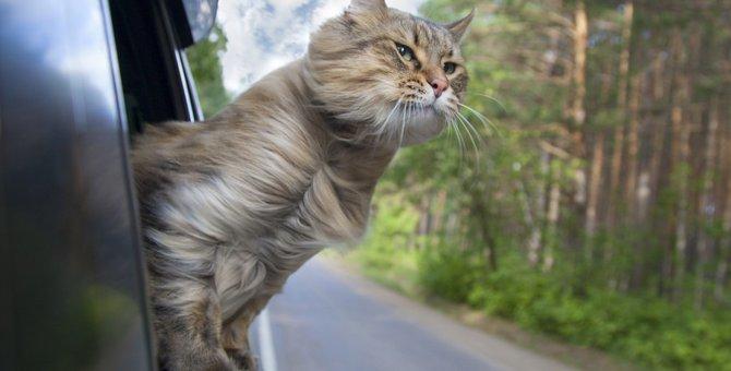 猫とお出かけする時の注意点、そのための準備や安全対策とは?